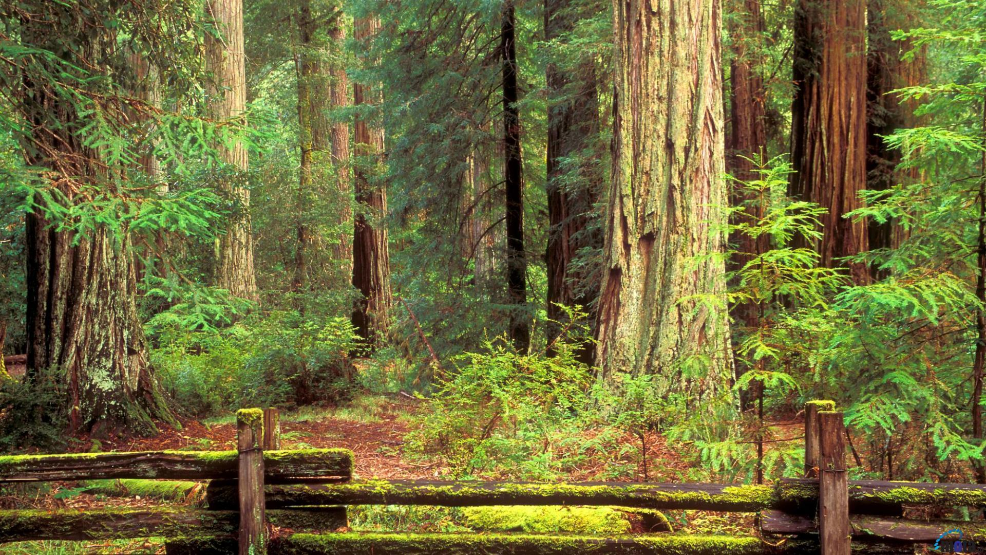 red wood for gorgeous - photo #3