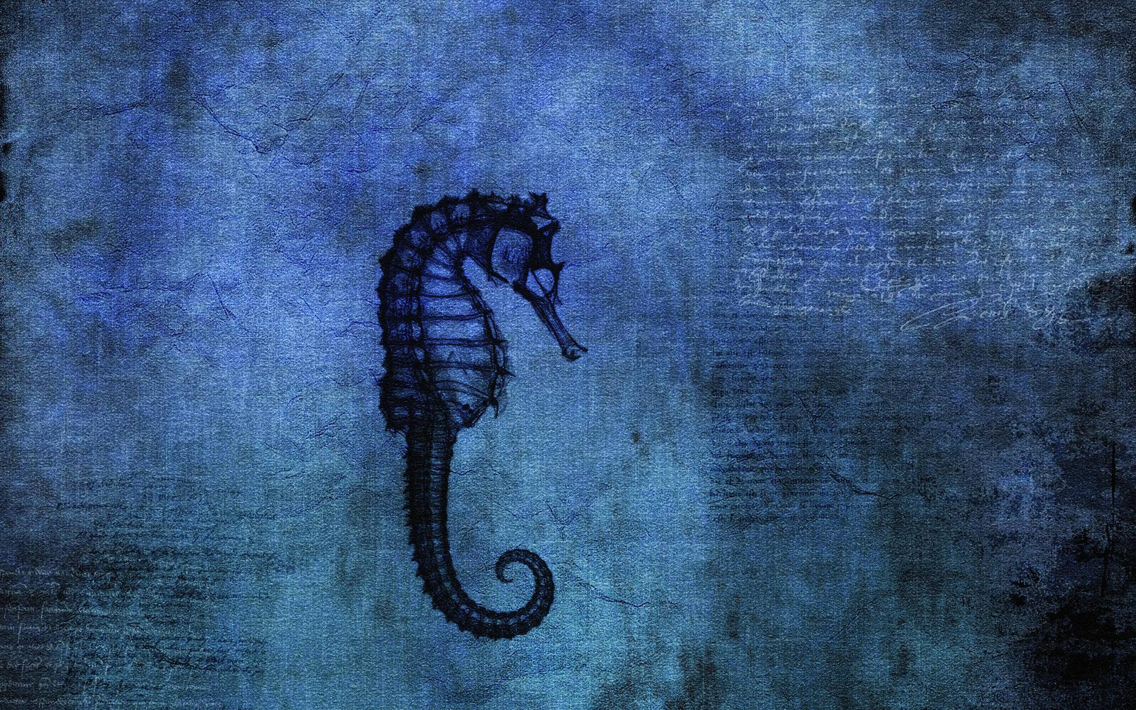 Seahorse Wallpapers Wallpaper Cave