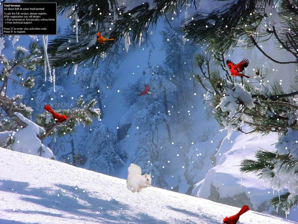 Beautiful Free Winter Wallpaper Desktop Backgrounds