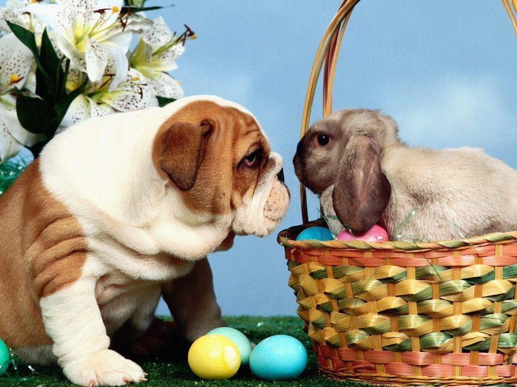 Cute Easter Wallpapers Wallpaper Cave