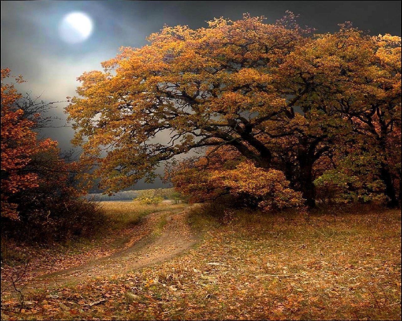 autumn wallpaper 007 free - photo #2