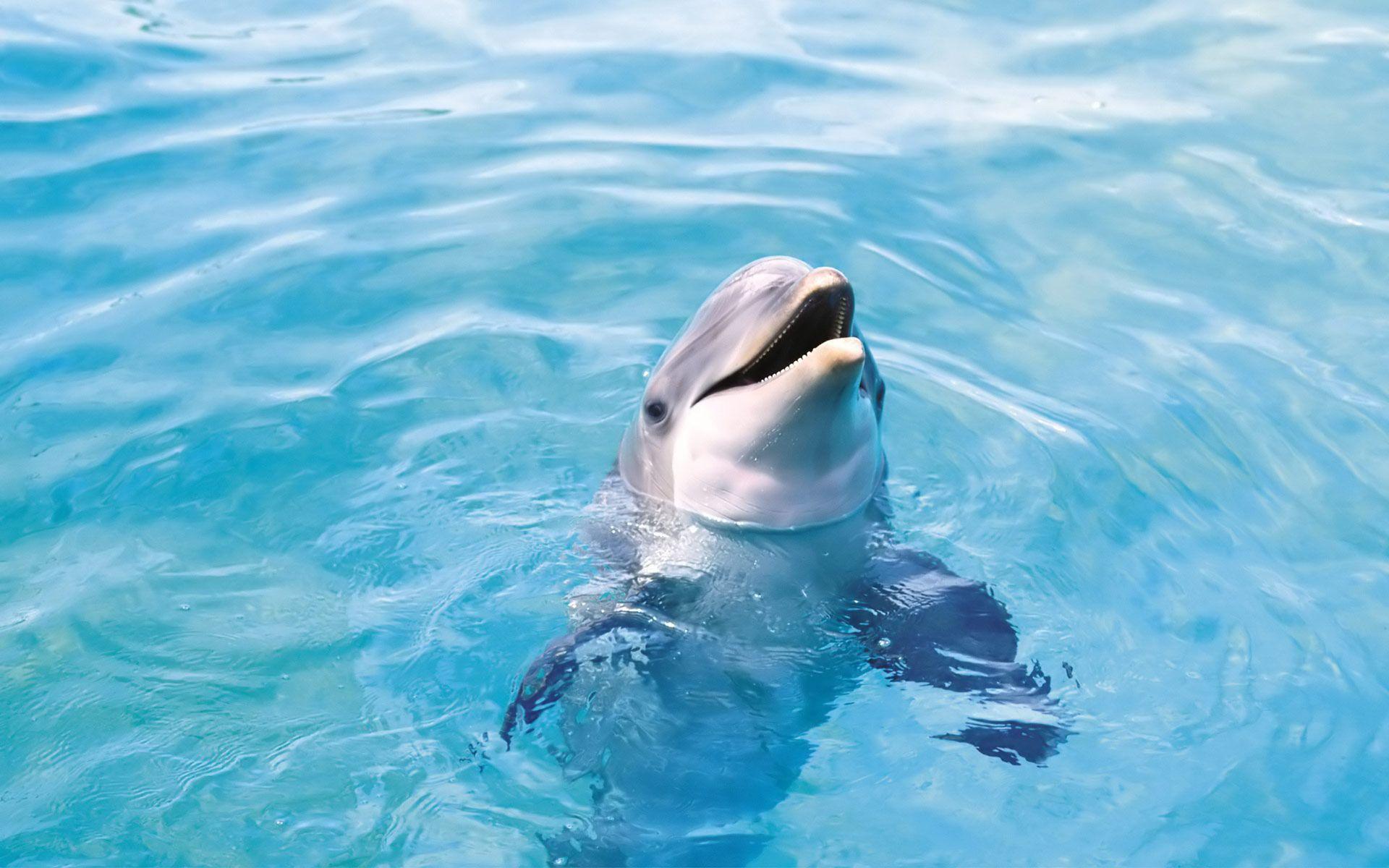 Cute Dolphin Wallpaper | BEAUTIFUL