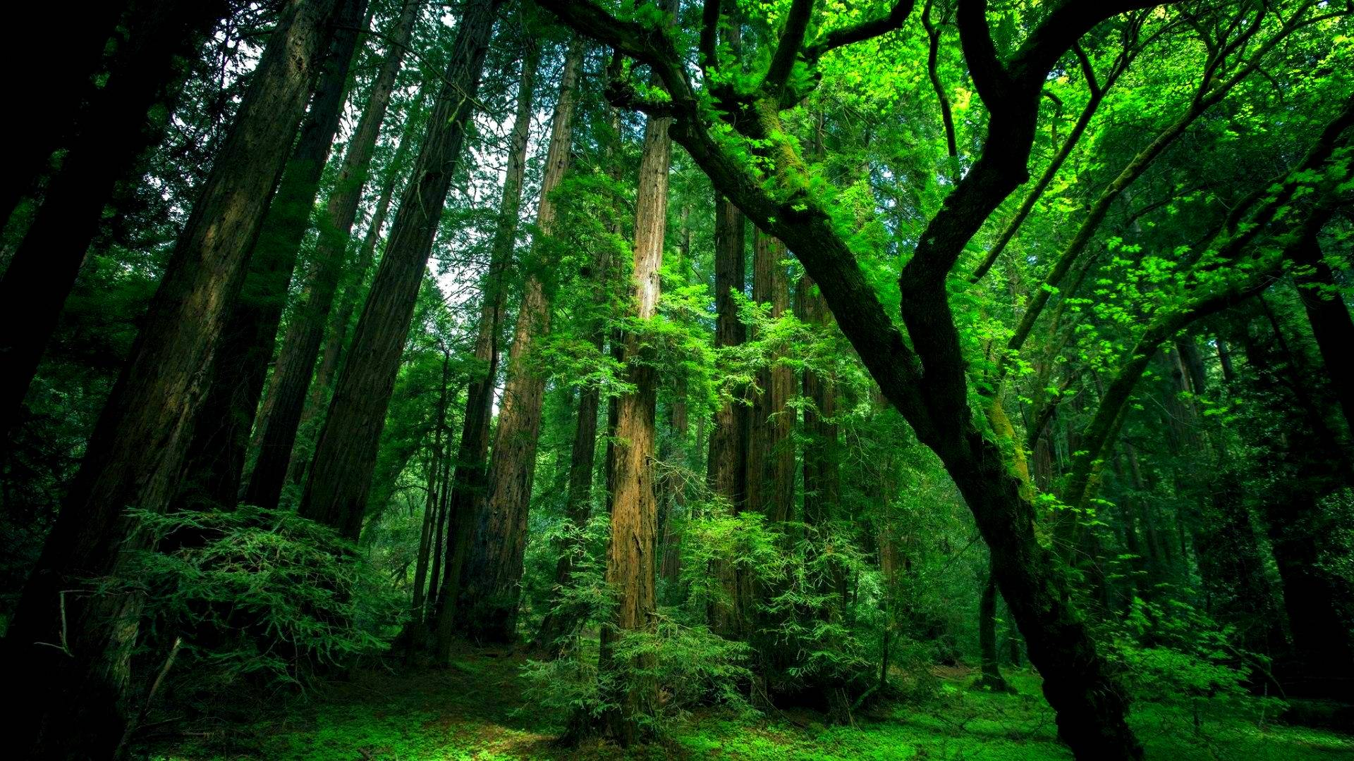 Permalink to Green Forest Wallpaper Desktop