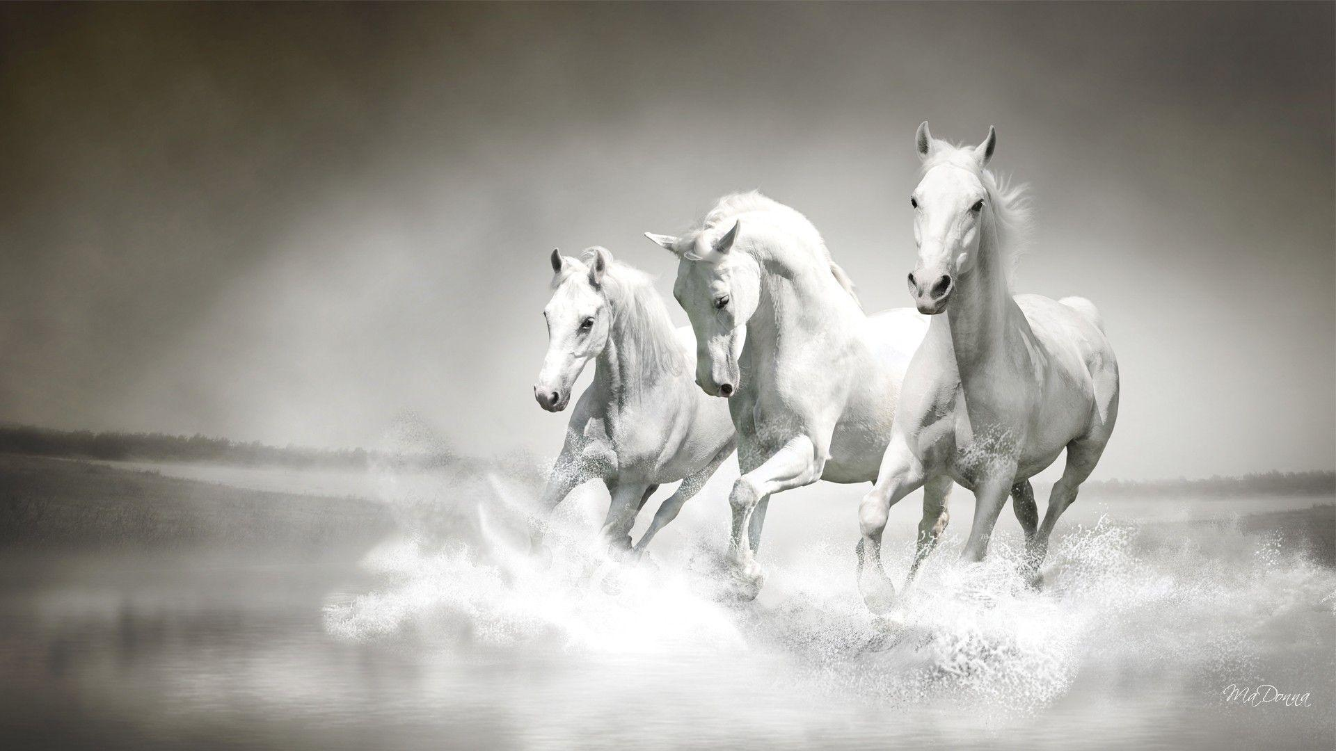 Wallpapers For > Running Horse Wallpapers High Resolution