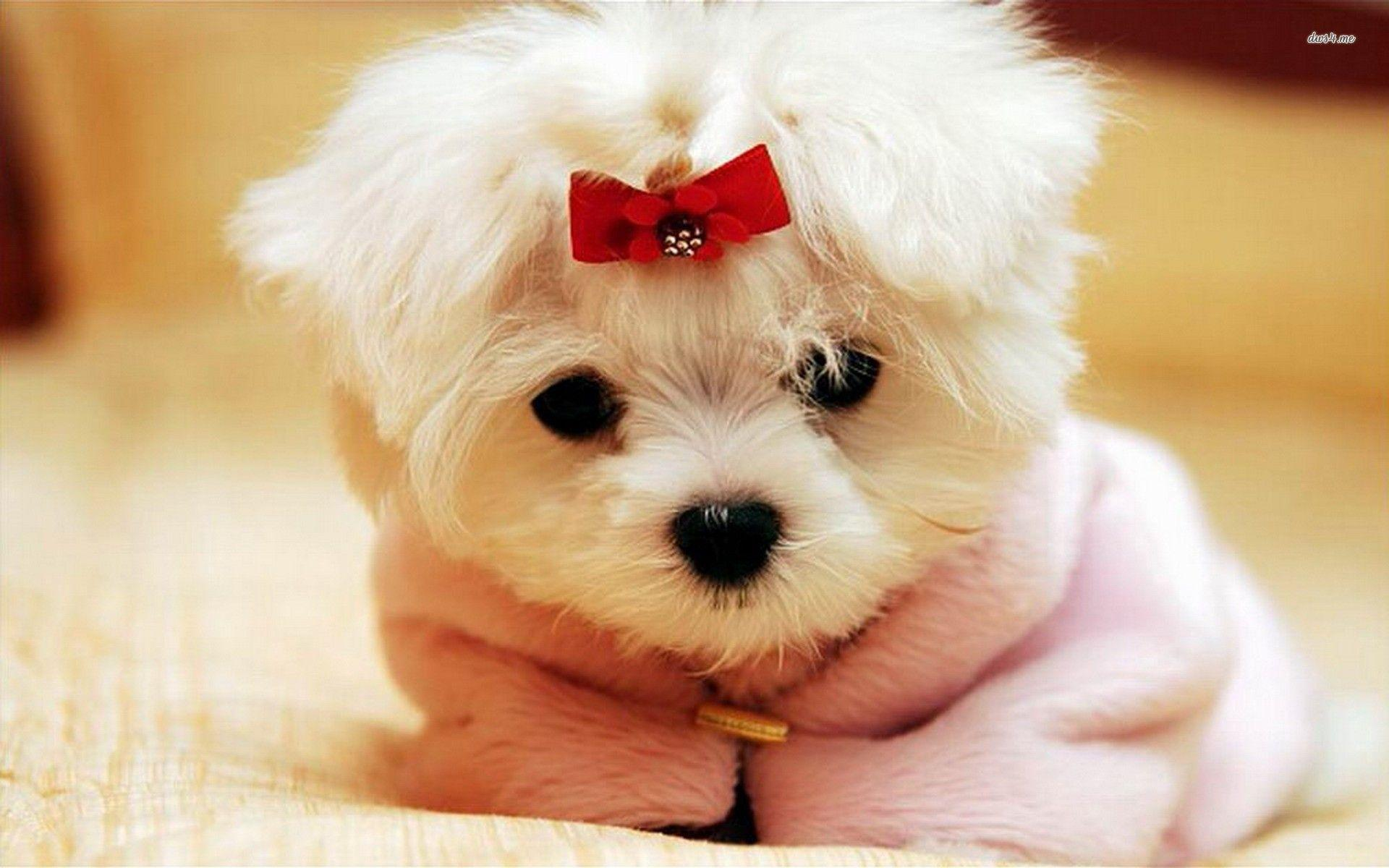 cute puppies backgrounds wallpaper cave