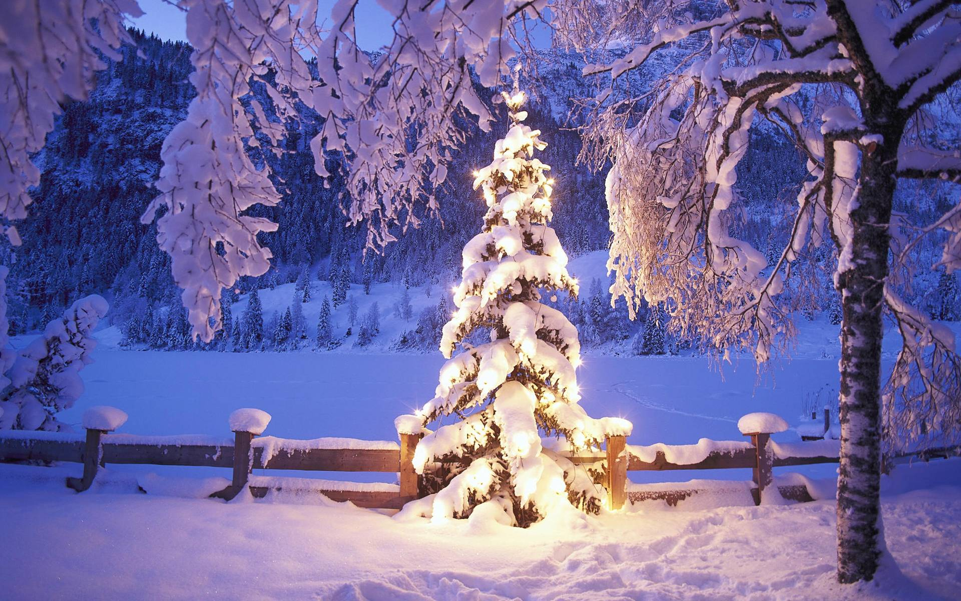 Winter Wallpapers Picture Full Hd Winter Free Wallpaper