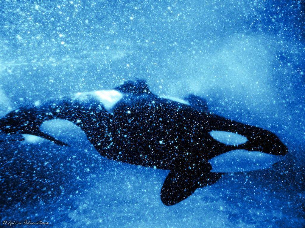 Orca Wallpaper by annlo13 on DeviantArt