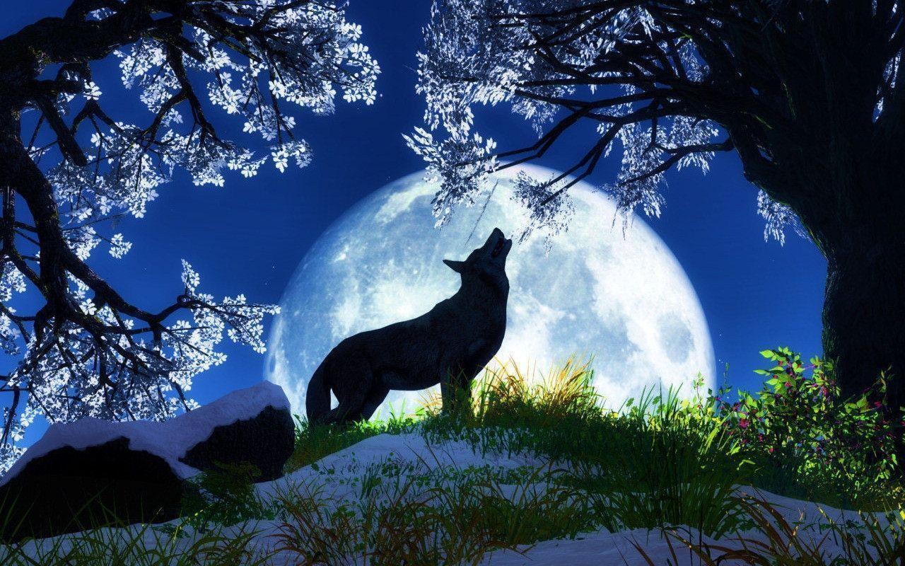 Animal Wallpaper: Wolf Wallpaper Photo for Wallpaper Background ...
