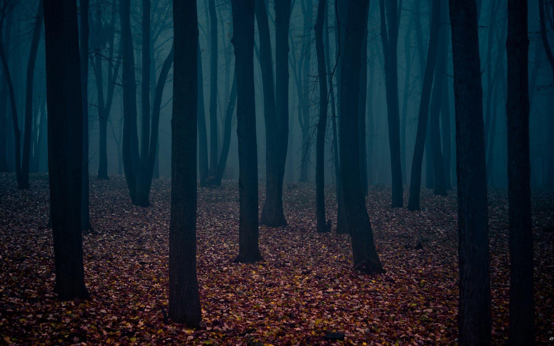 Dark Forest Wallpapers