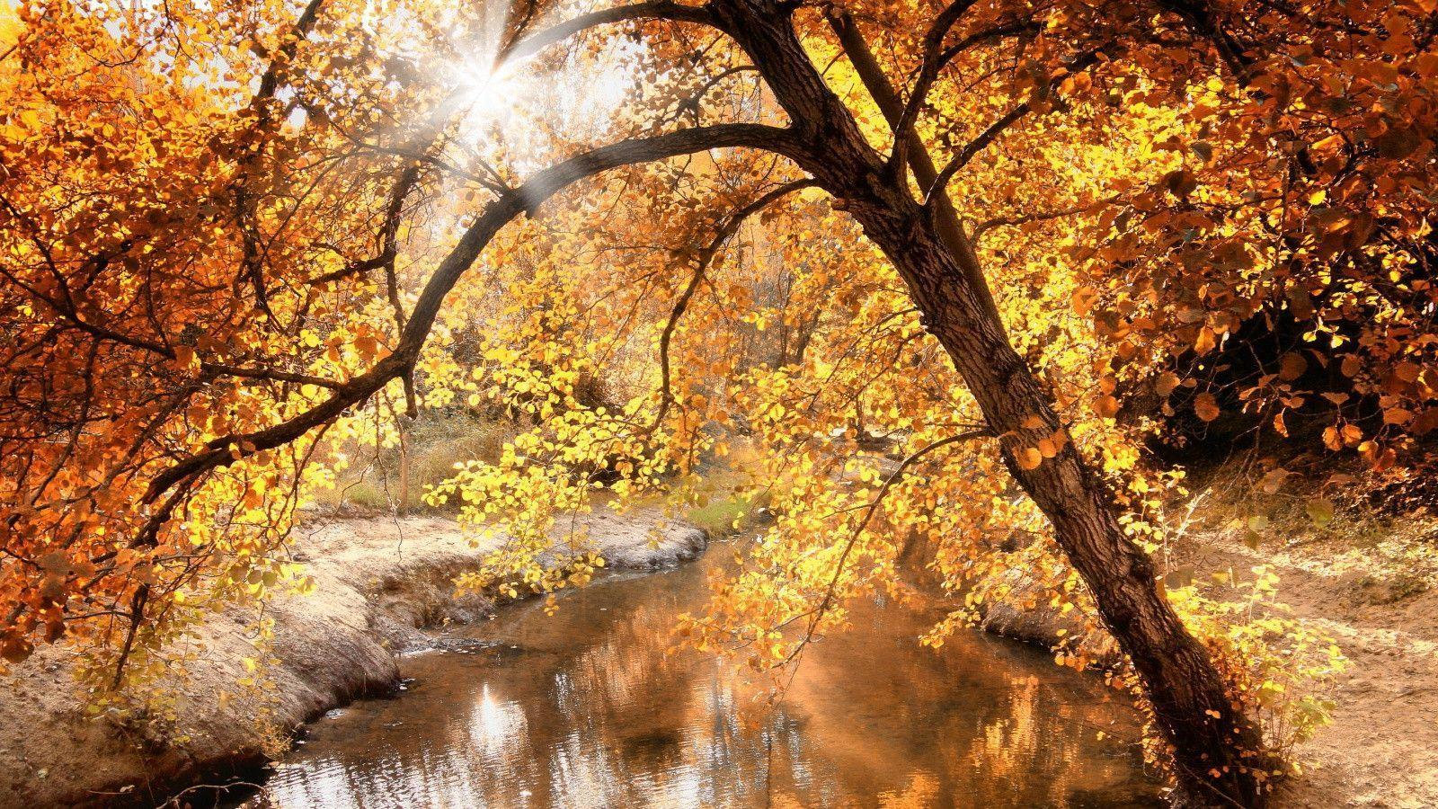 Category Fall  page 1  Nature Wallpaper Pictures