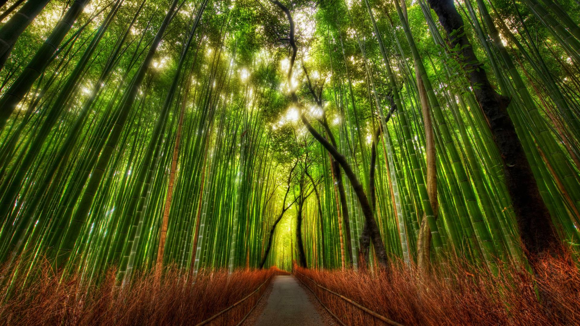 Bamboo Forest HD wallpapers « Wallpapers HD