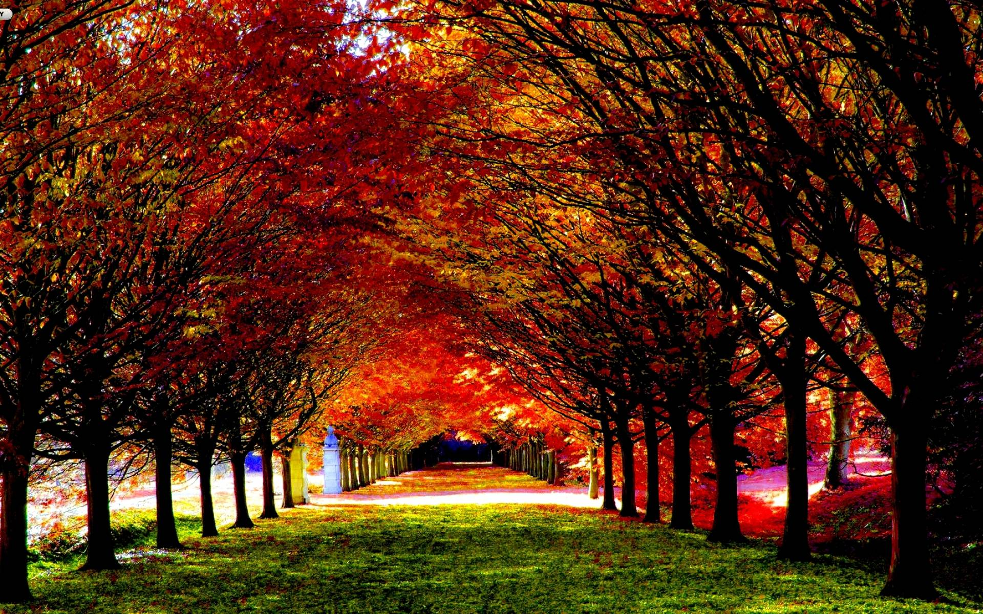 fall wallpaper widescreen monitor - photo #29