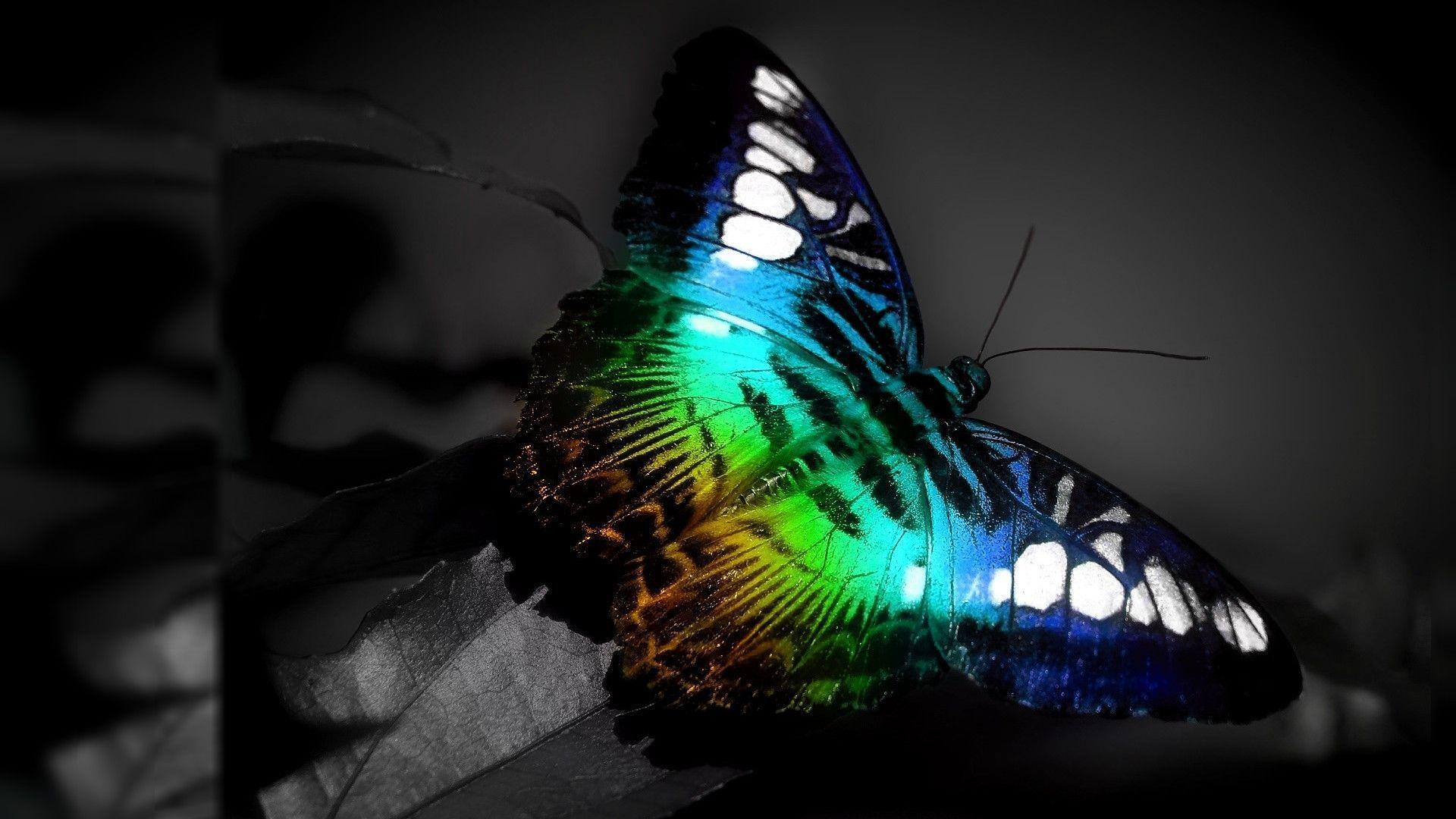 Butterfly Desktop Backgrounds - Wallpaper Cave