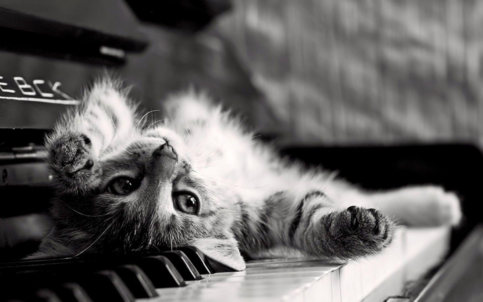 Cute Cat On The Piano Desktop Wallpaper | Magnificent Backgrounds