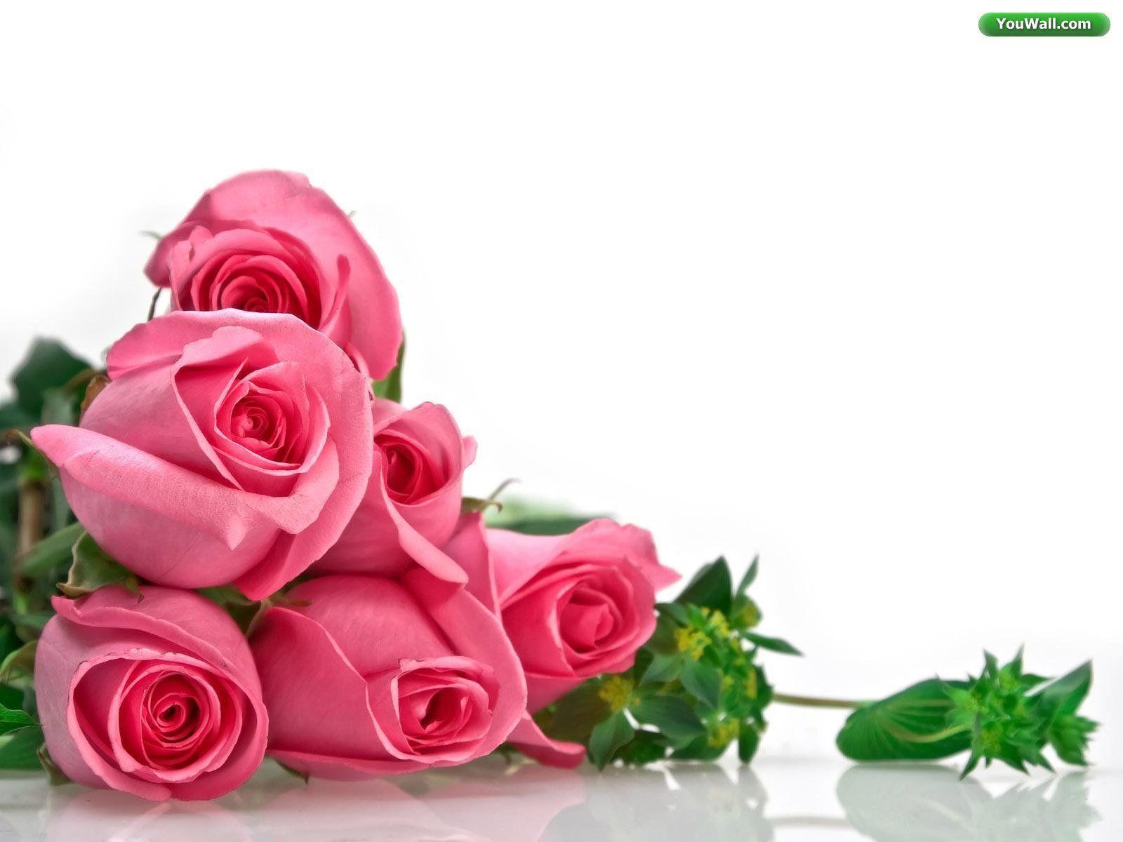 rose wallpaper | rose wallpaper