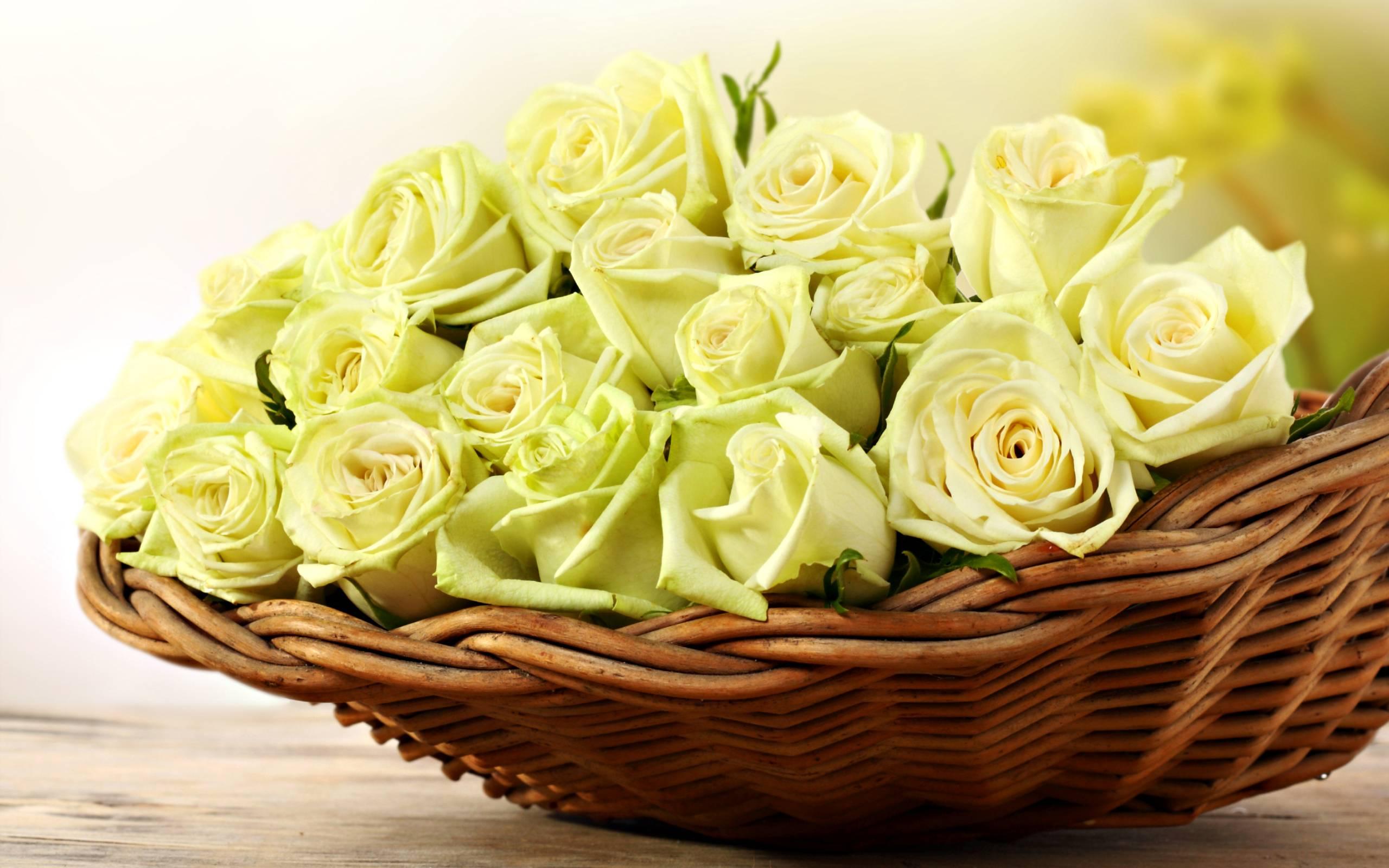 Hd wallpaper yellow rose - Hd Wallpapers 1080p Yellow Rose Hd Wallpapers Os