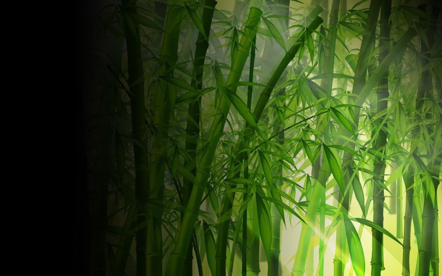 bamboo wallpaper by doantrangnguyen - photo #10