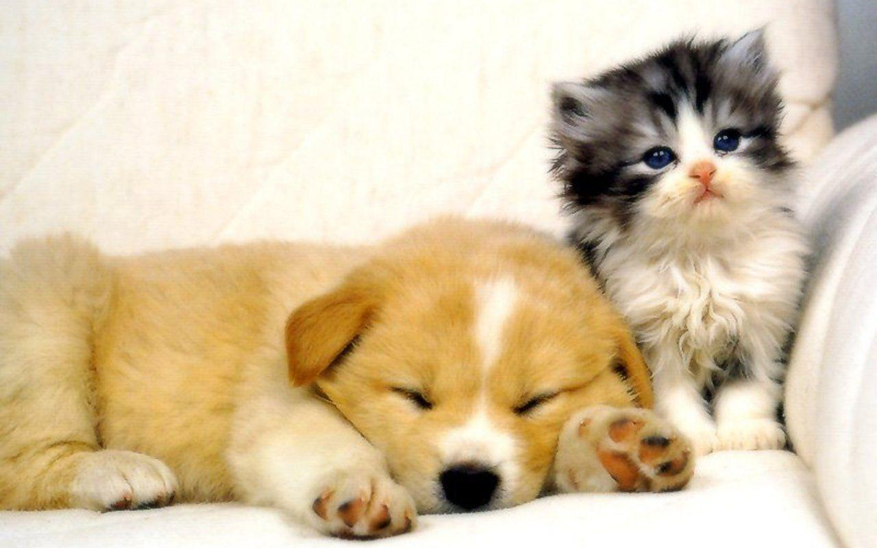 Dog and Cat Wallpapers