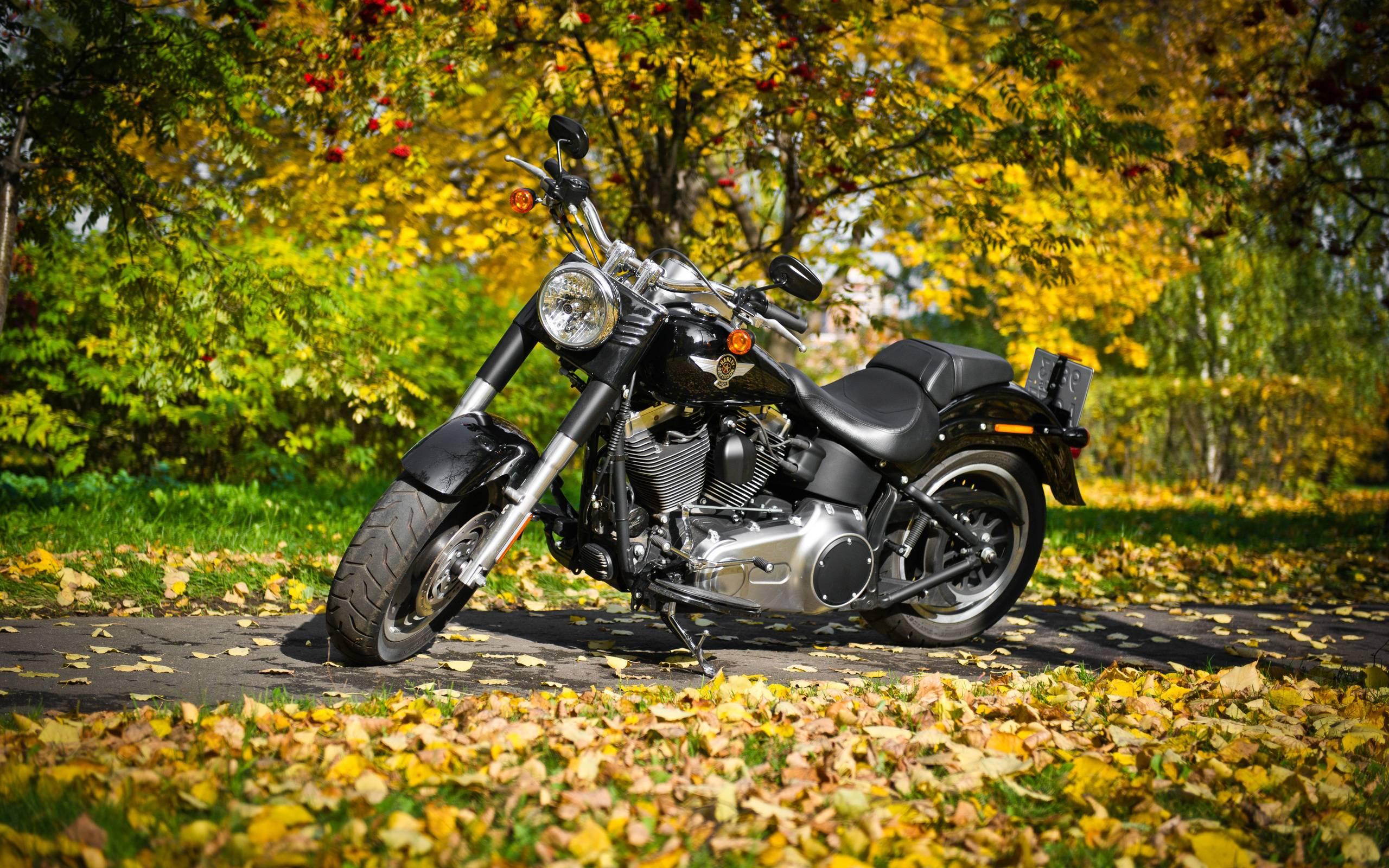 Download Wallpaper Harley Davidson Fat Boy Motorcycle Grass