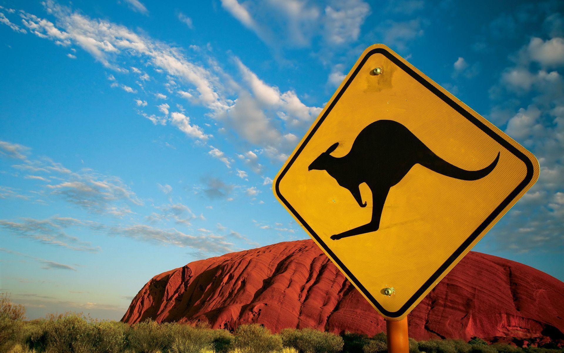 Kangaroo Wallpapers - Full HD wallpaper search