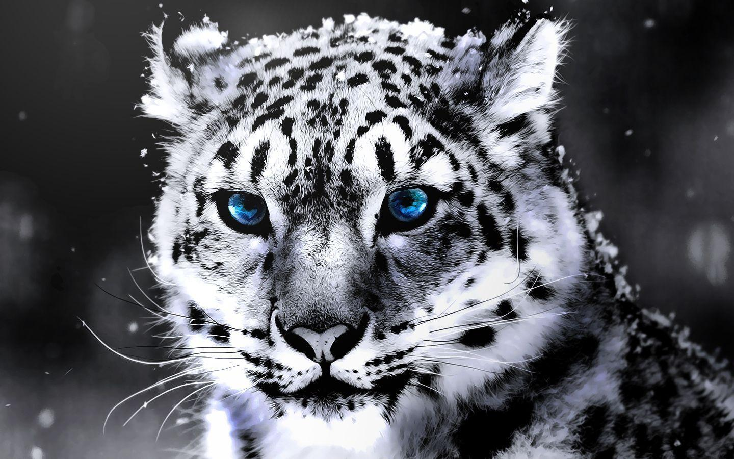 White Tiger Wallpapers Image 1824 HD Pictures