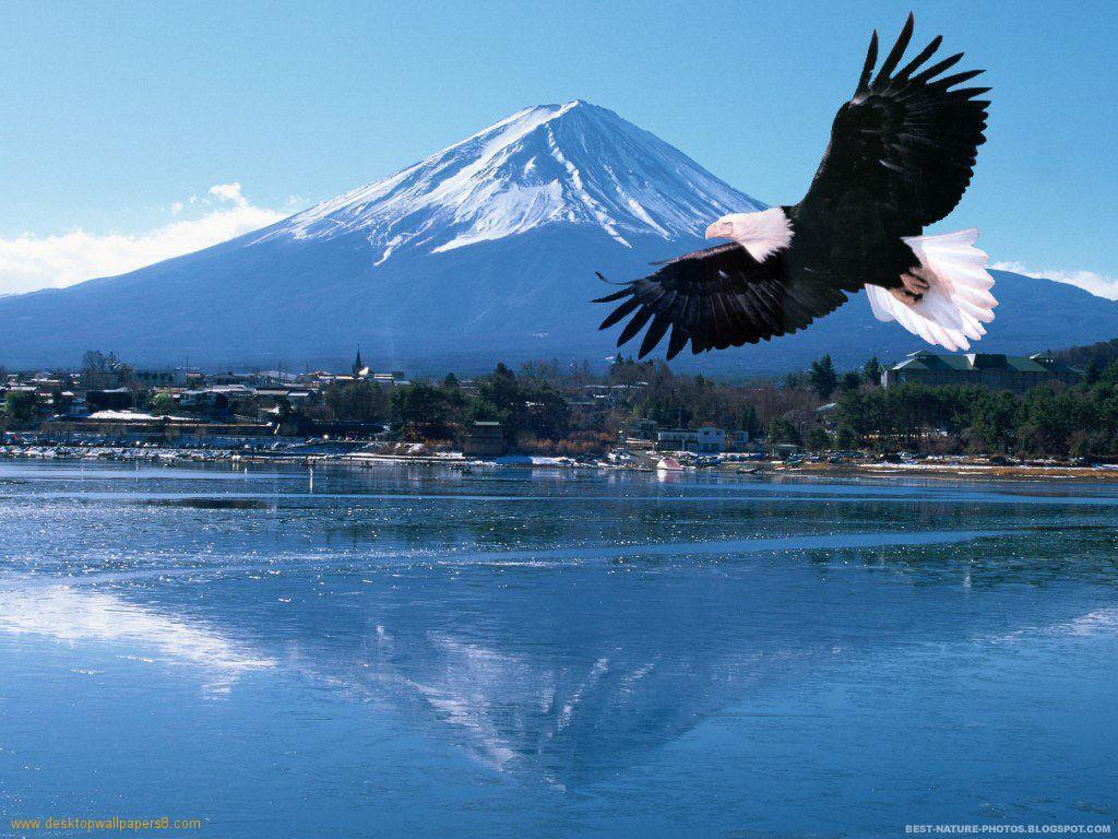 flying eagle wallpapers wallpaper cave