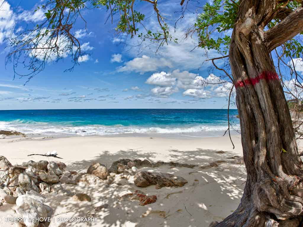 tropical beach wallpaper 120 - photo #8