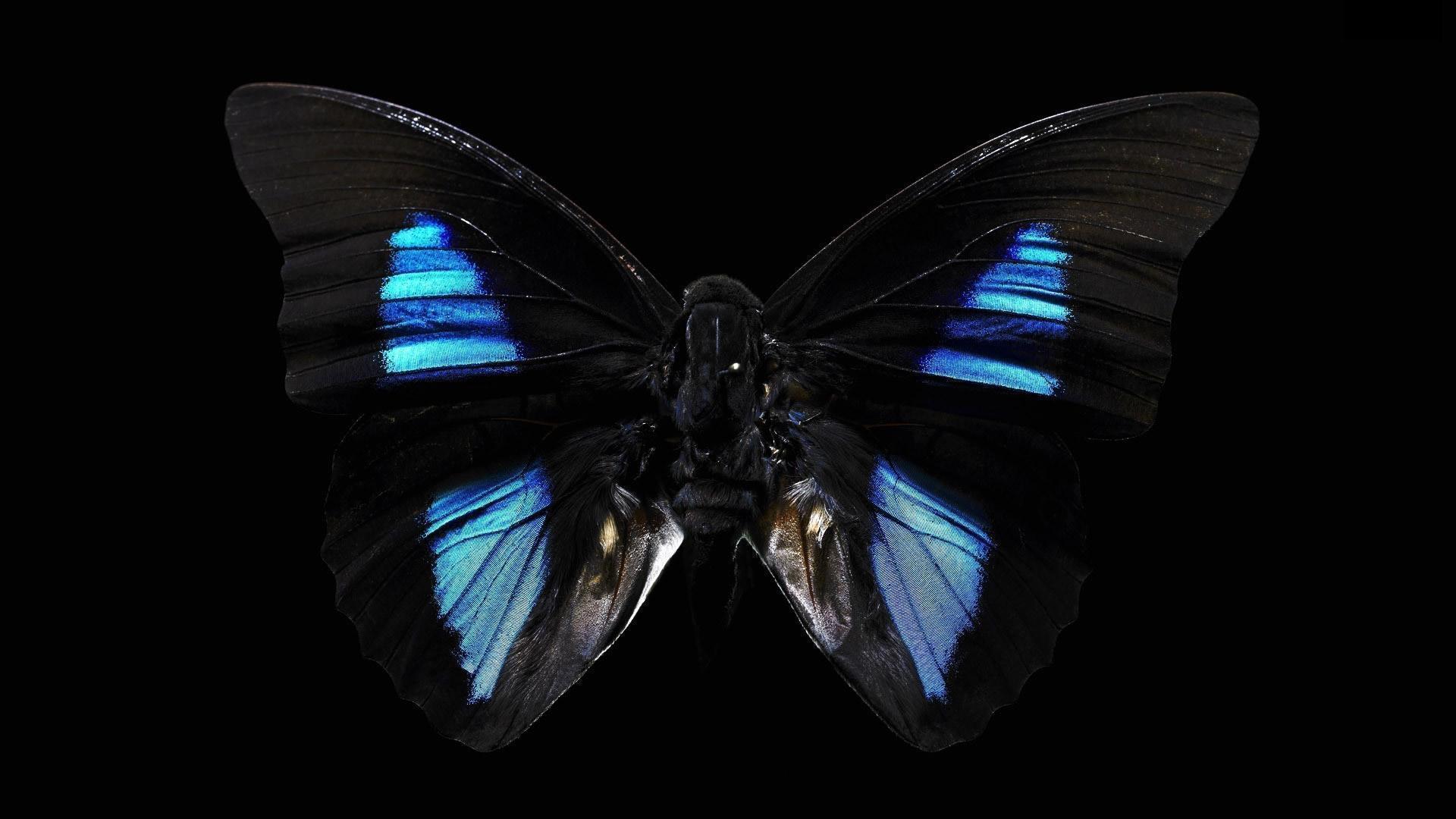 Butterfly Black Background Hd Wallpapers Desktop Free