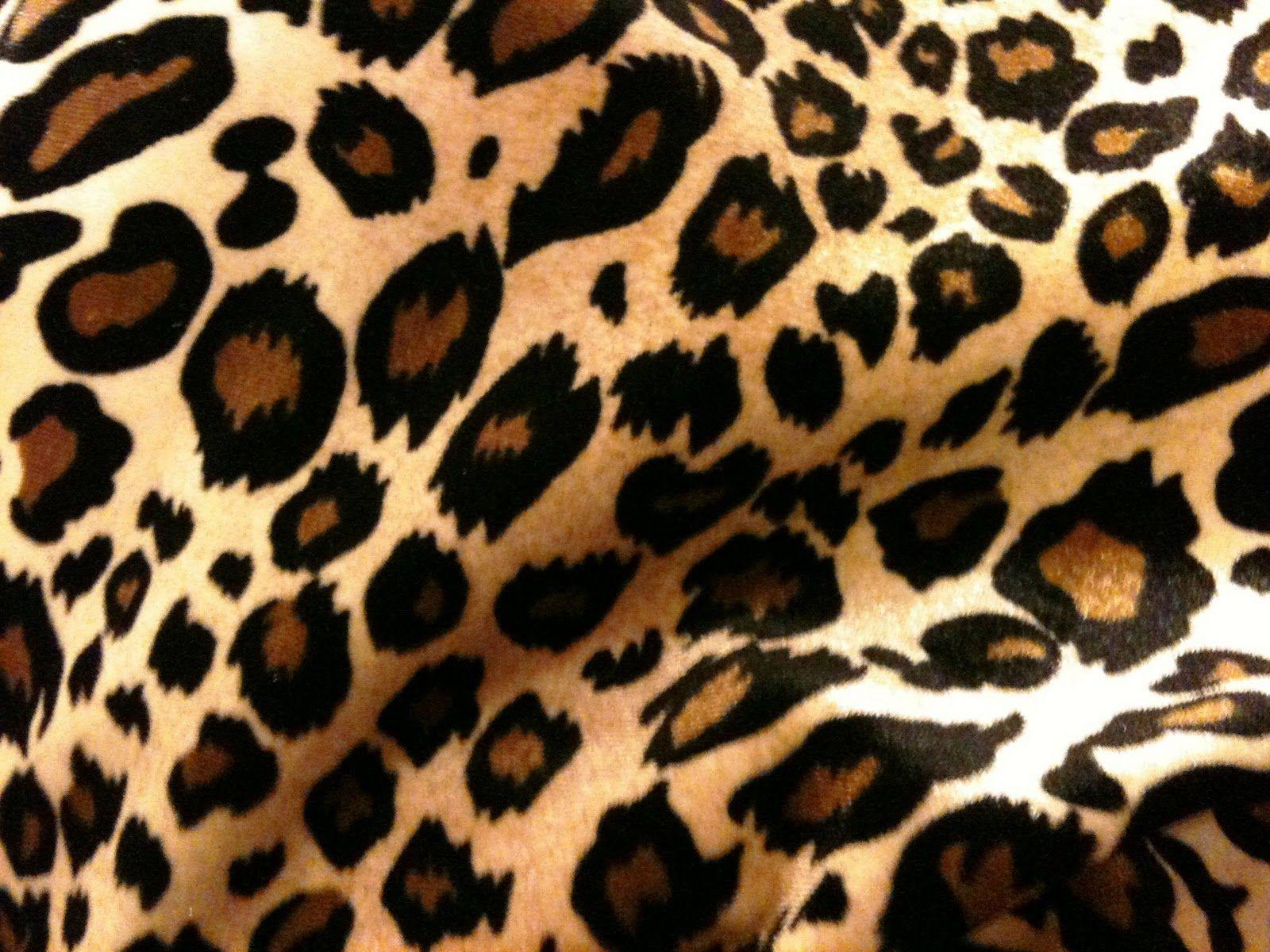 cheetah backgrounds wallpaper cave