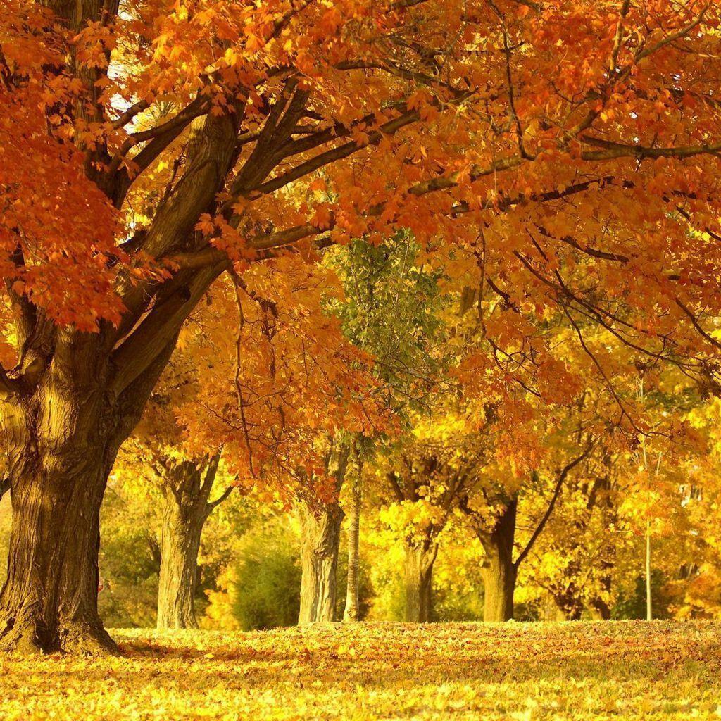 Beautiful Fall Pictures Wallpapers
