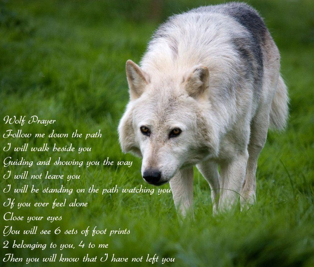 Wolf Prayer Wallpapers