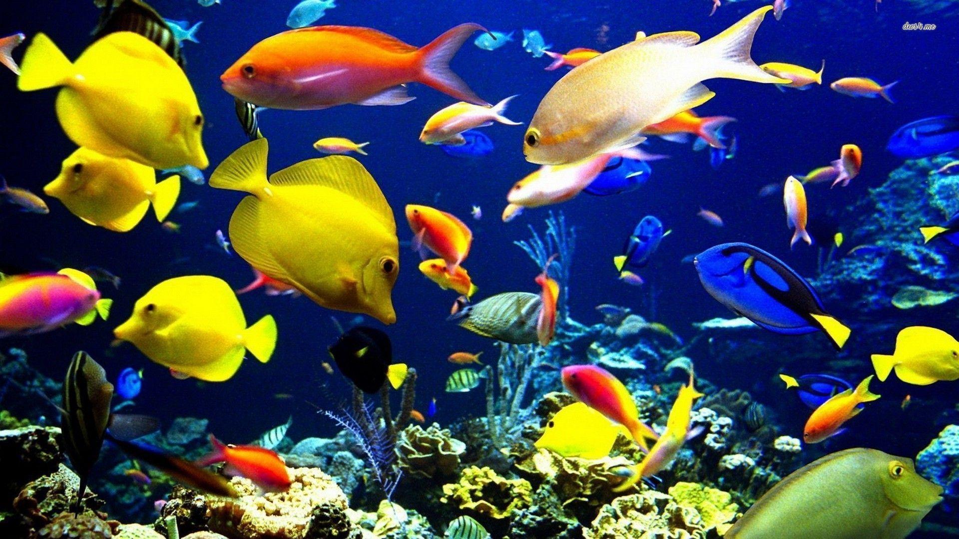 Hd Tropical Island Beach Paradise Wallpapers And Backgrounds: Tropical Fish Backgrounds
