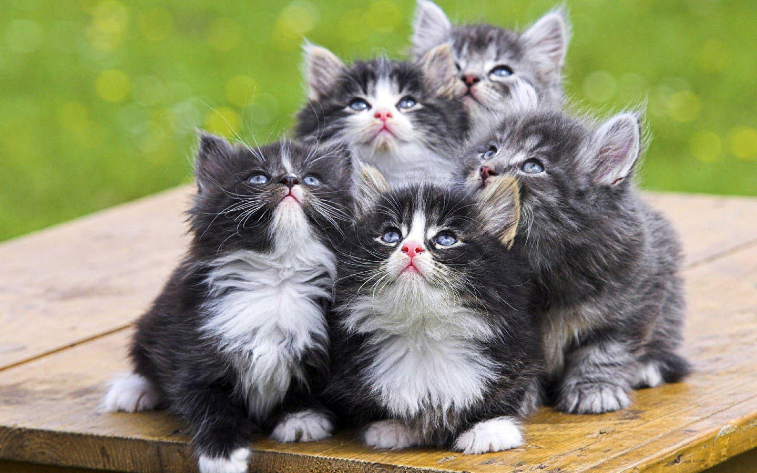 Cute Kittens Backgrounds
