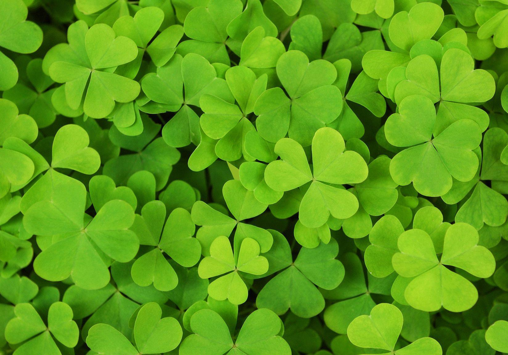 patricks day shamrock background - photo #29