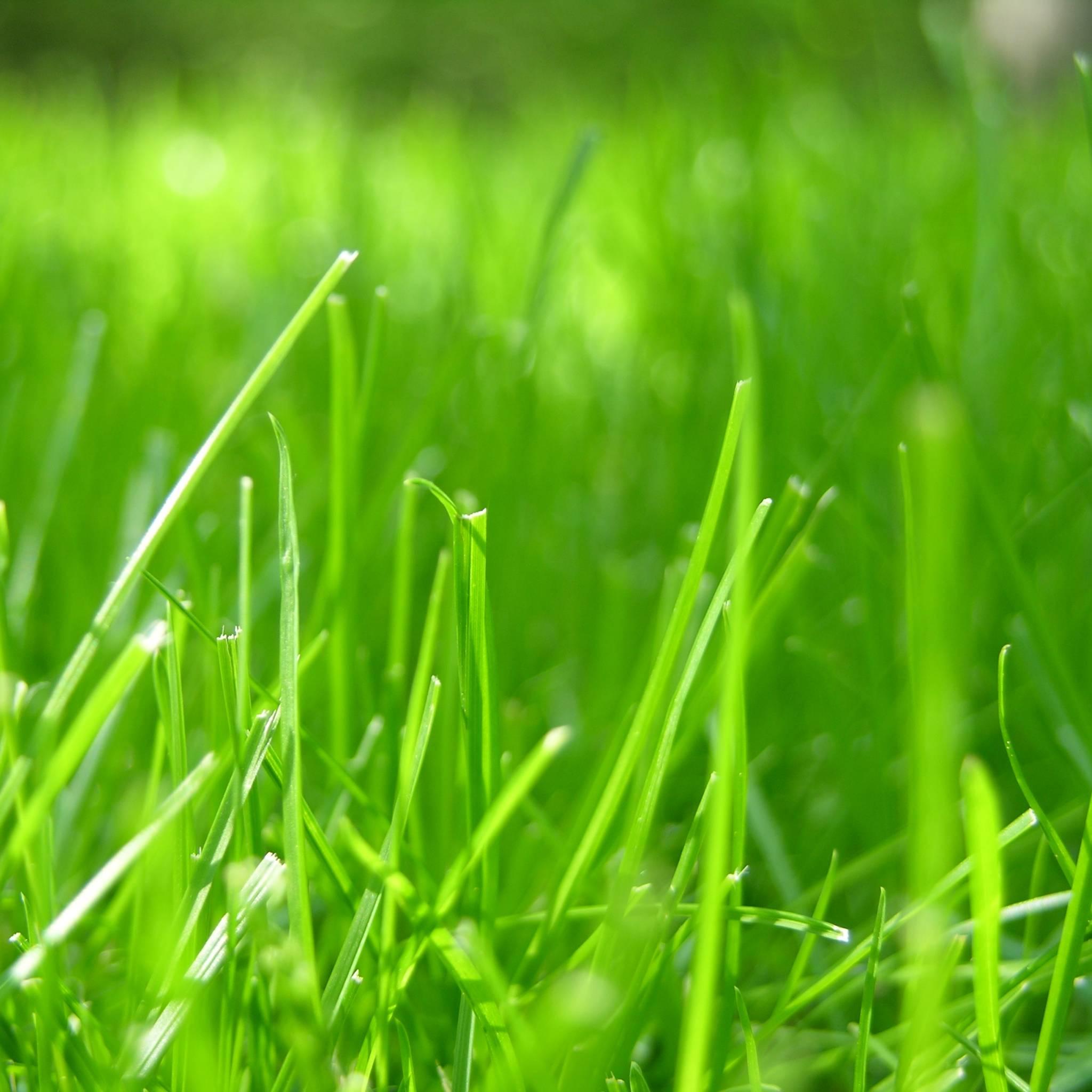 apple fruit background grass - photo #32