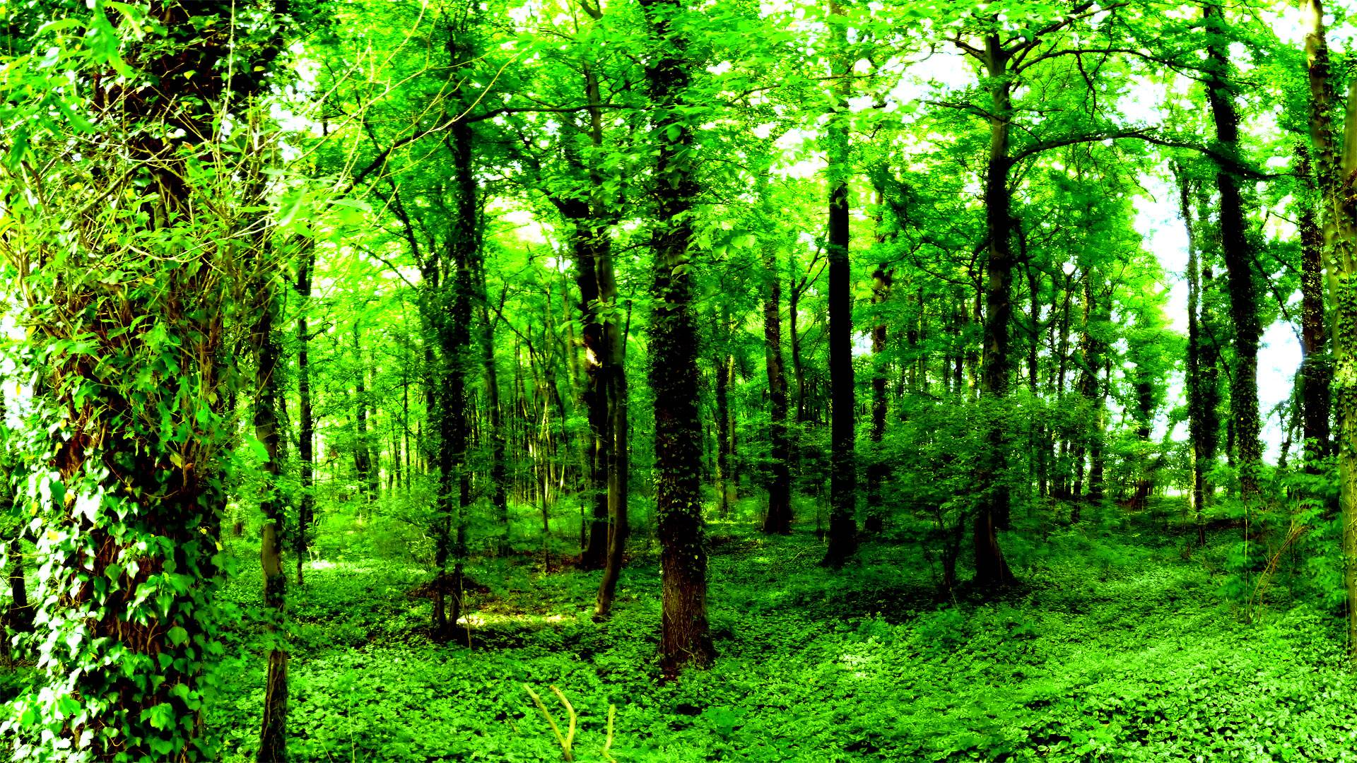 dark forest wallpapers picture