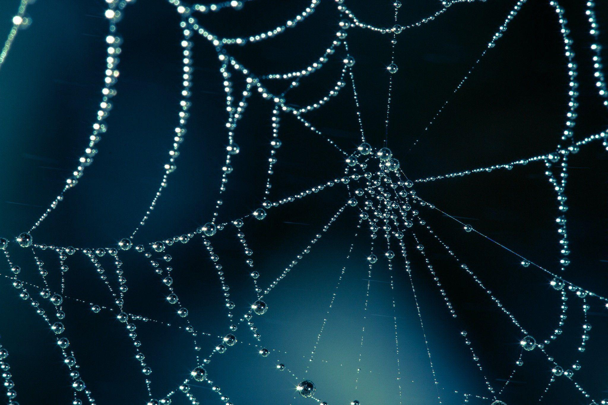 Spider web wallpapers wallpaper cave for Web and windows