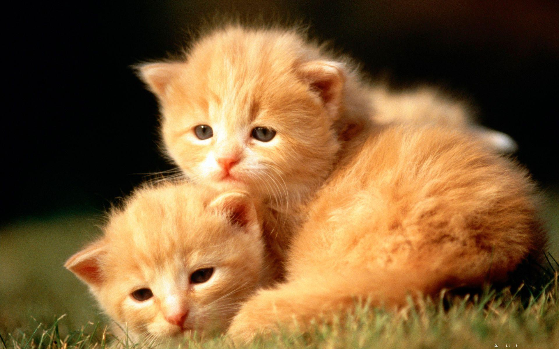 Cute Baby Animal Pictures Wallpapers