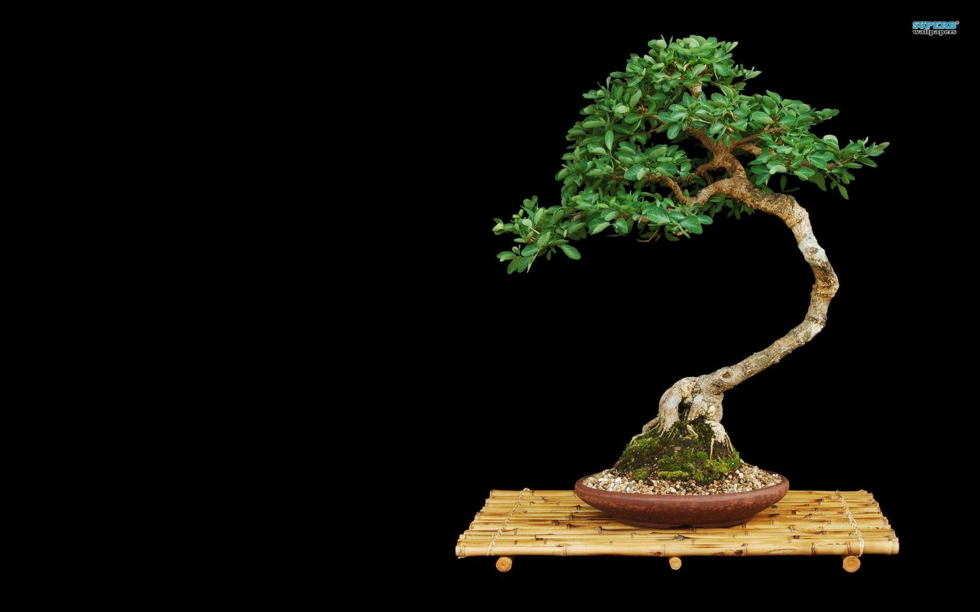 Bonsai wallpaper - Photography wallpapers - #
