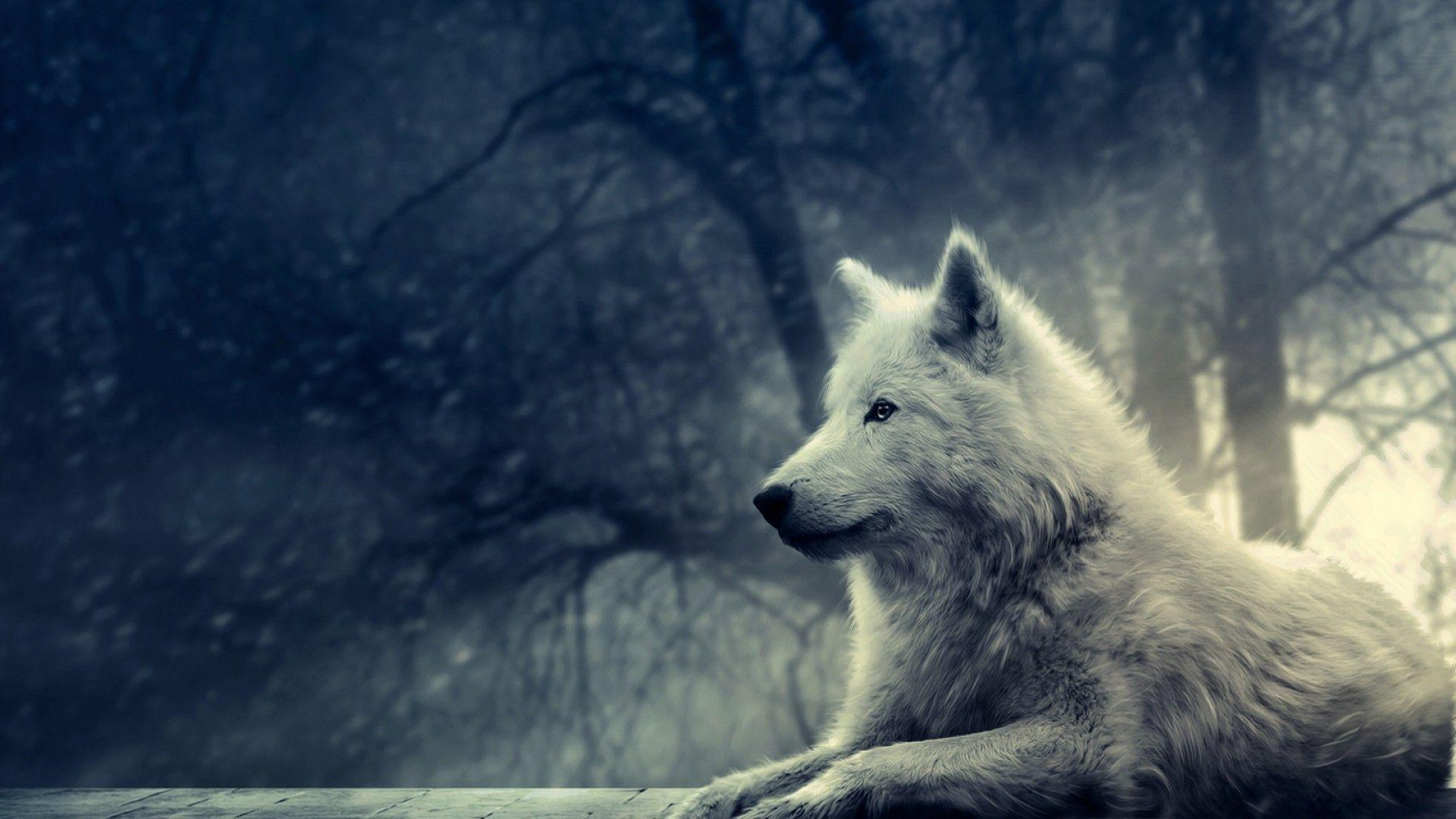 Wolf HD Wallpaper 1920x1080