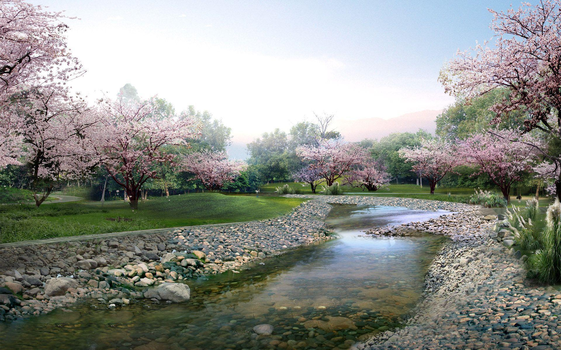 sakura flower best HD wallpaper pics | Wallpicshd