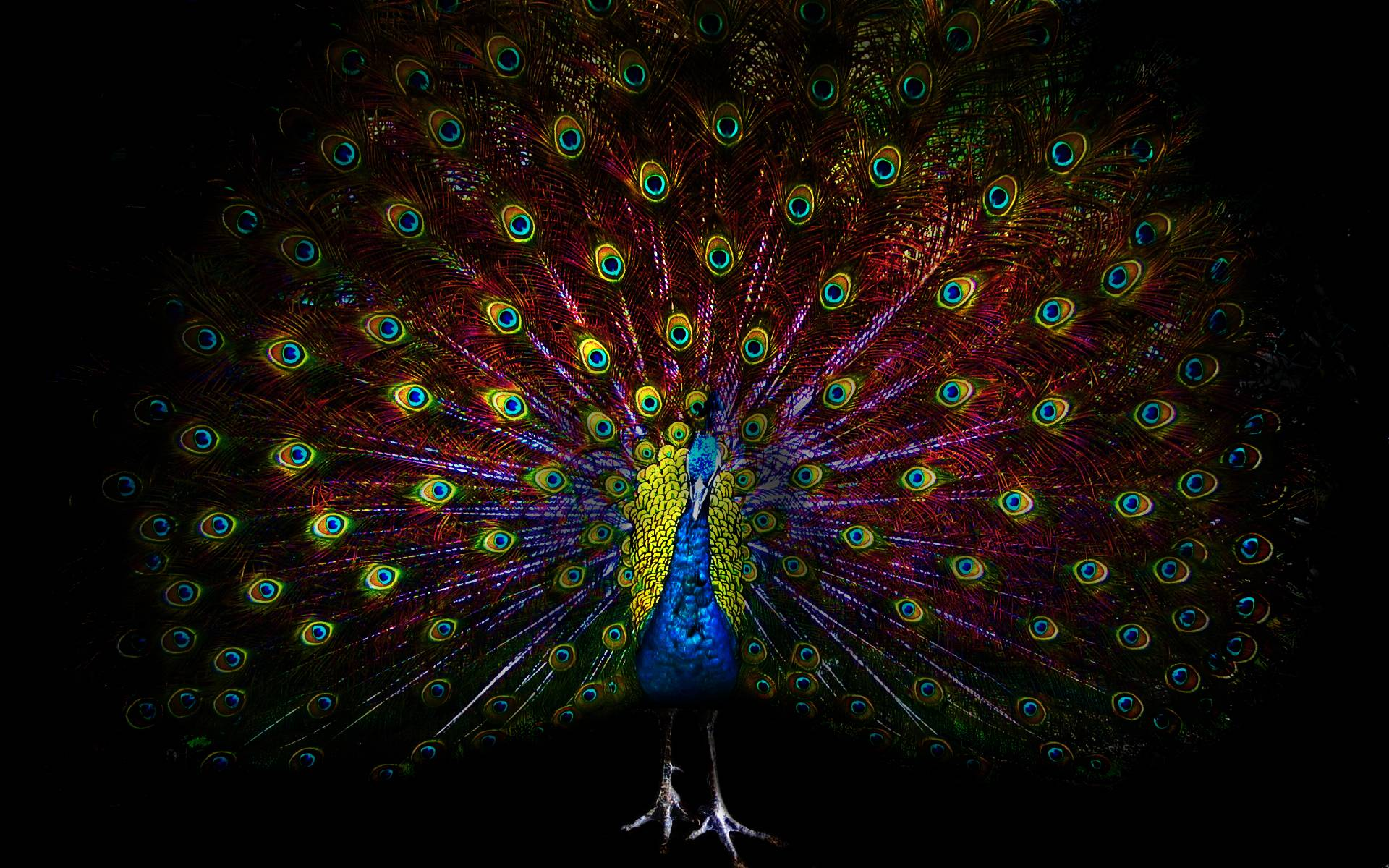 Peacock Wallpapers Desktop - Wallpaper Cave