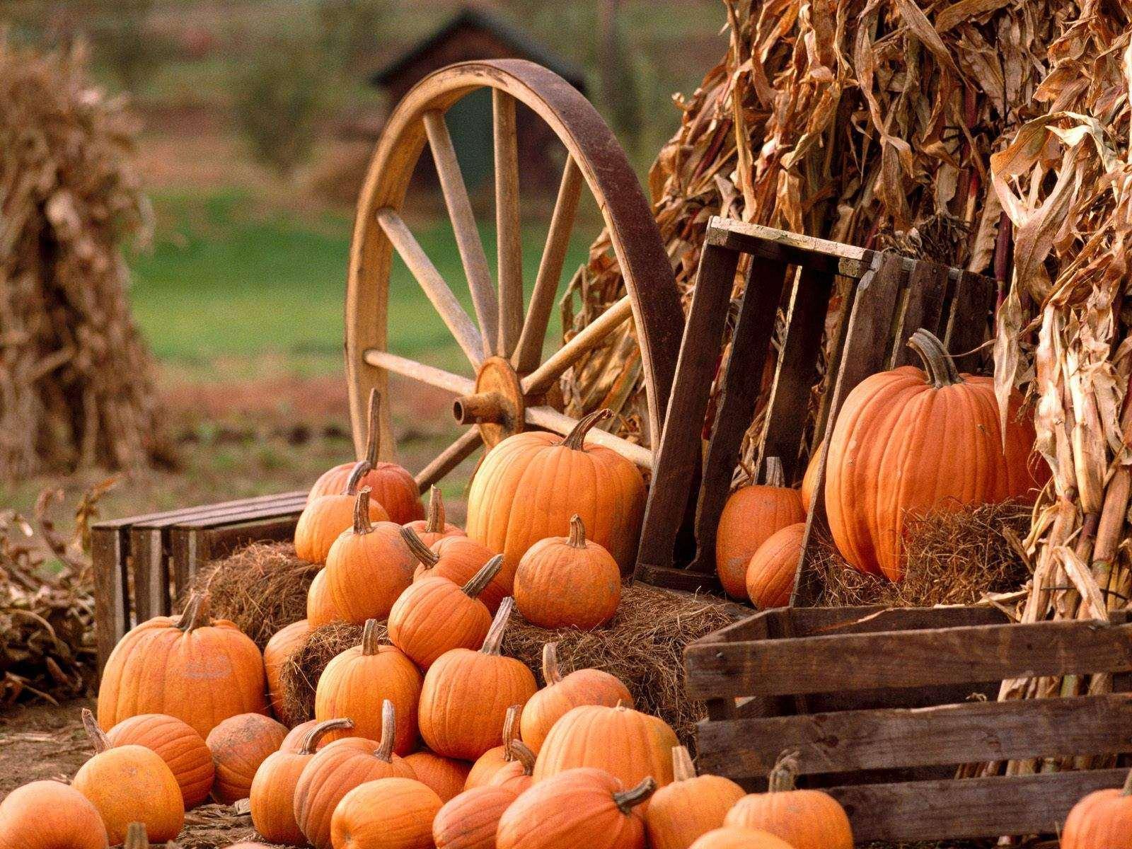 Hello October Pumpkin Photos, Wallpaper Hd 2016