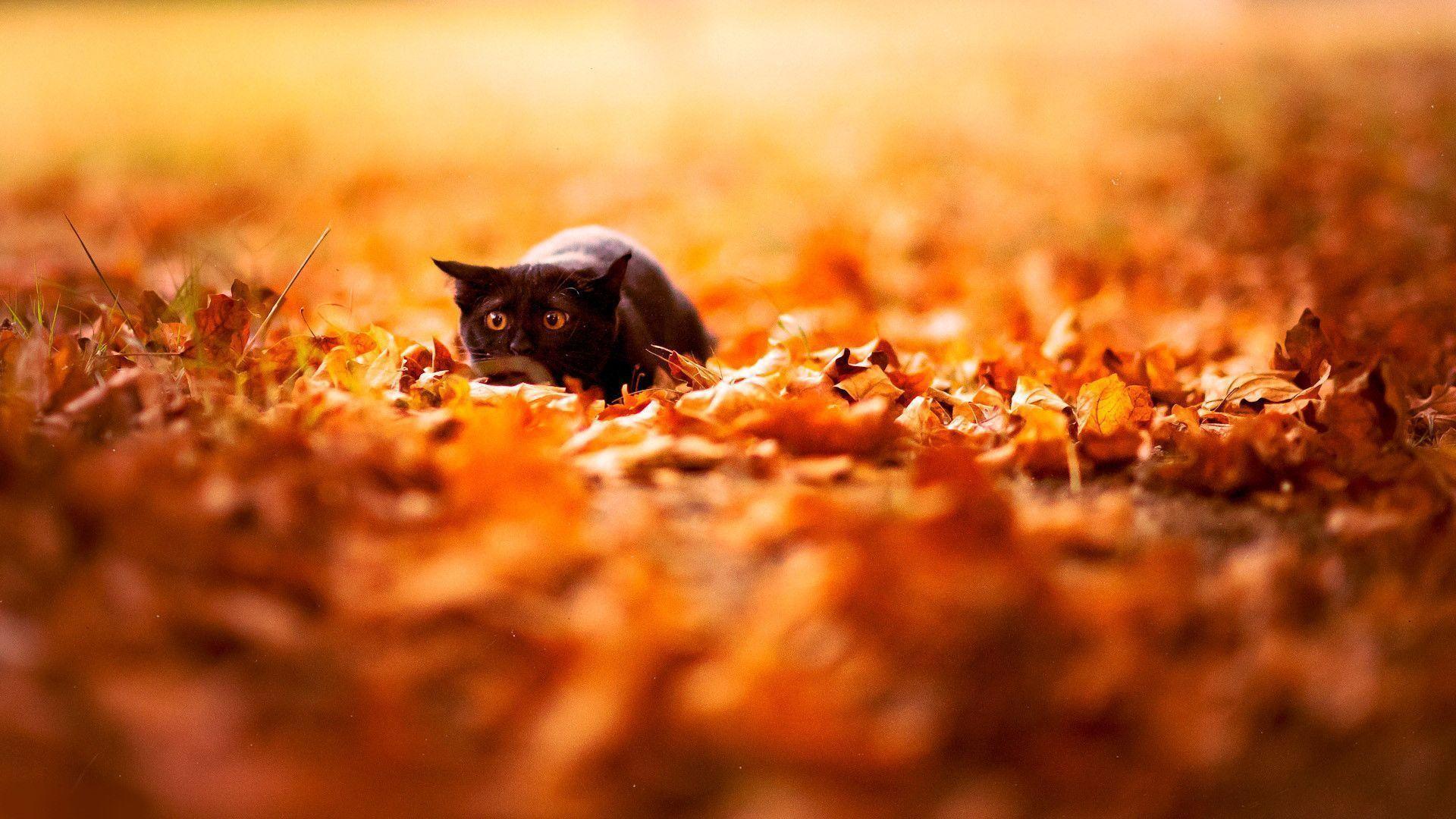 autumn leaves desktop wallpaper wallpaper autumn leaves desktop