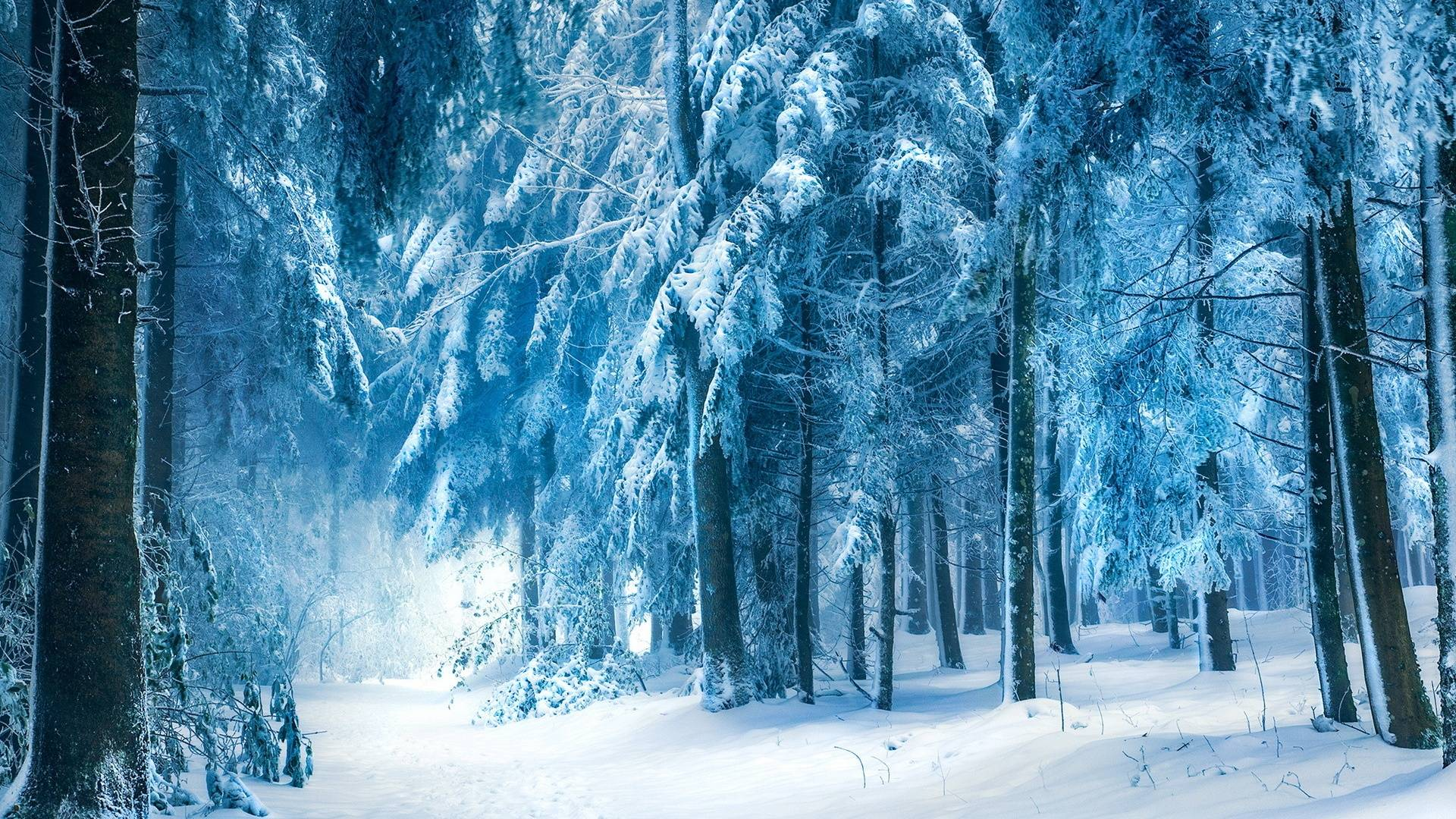 Snowy Forest Wallpapers - Wallpaper Cave - photo#13