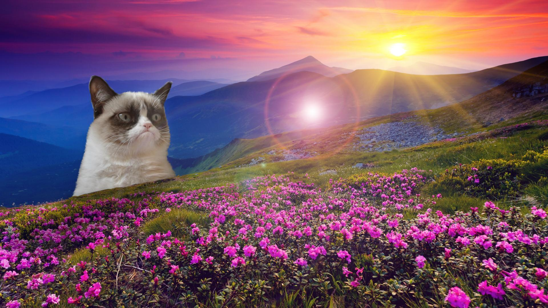 grumpy cat hd wallpapers - photo #9