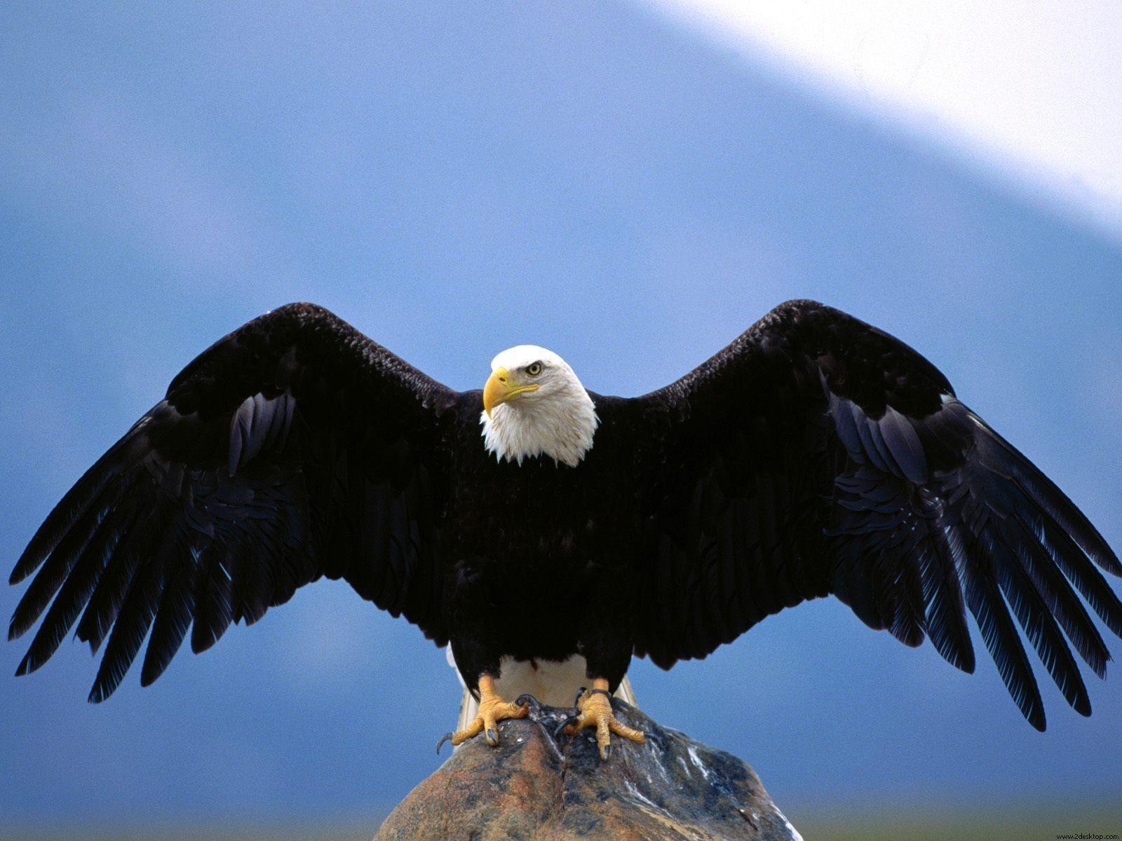 Eagle Desktop Wallpaper: Eagle Wallpapers Hd Free Download #9262 ...