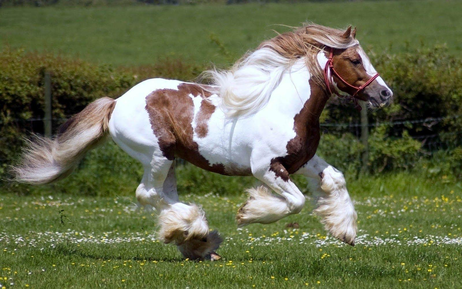 horse cute wallpapers horses running brown fast animal
