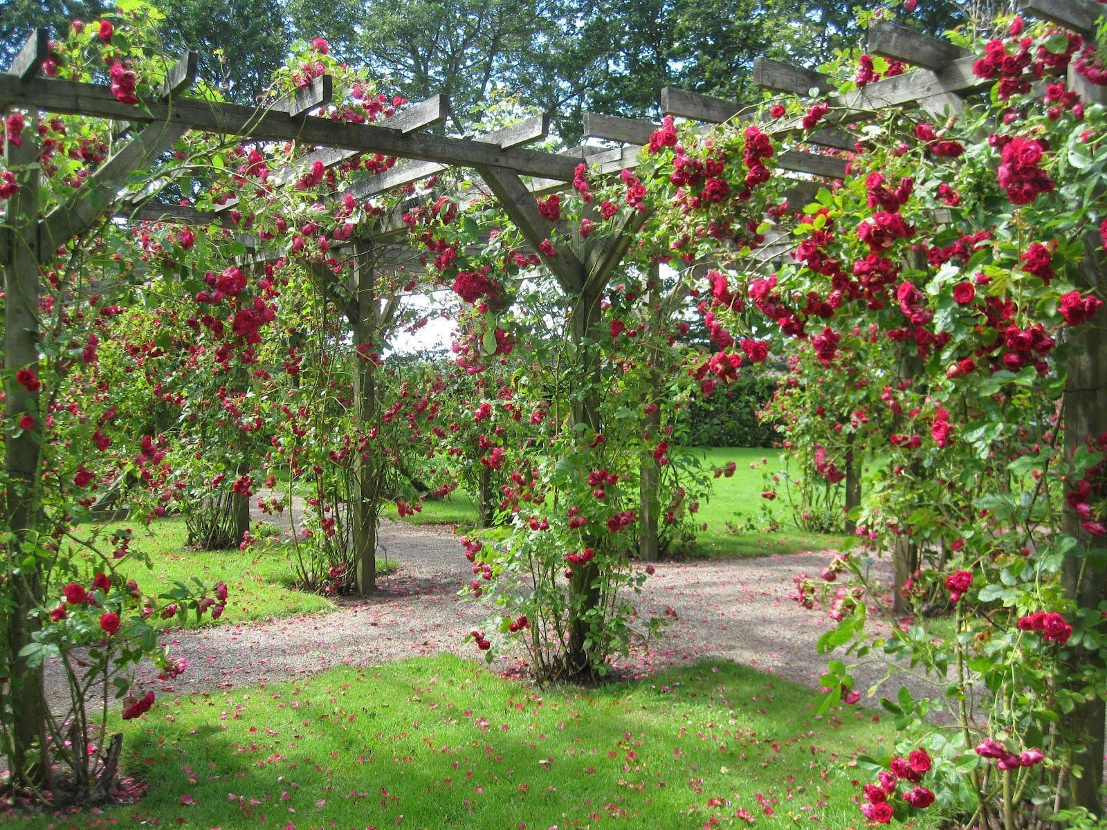 Rose Garden Picture Gallery Wallpapers