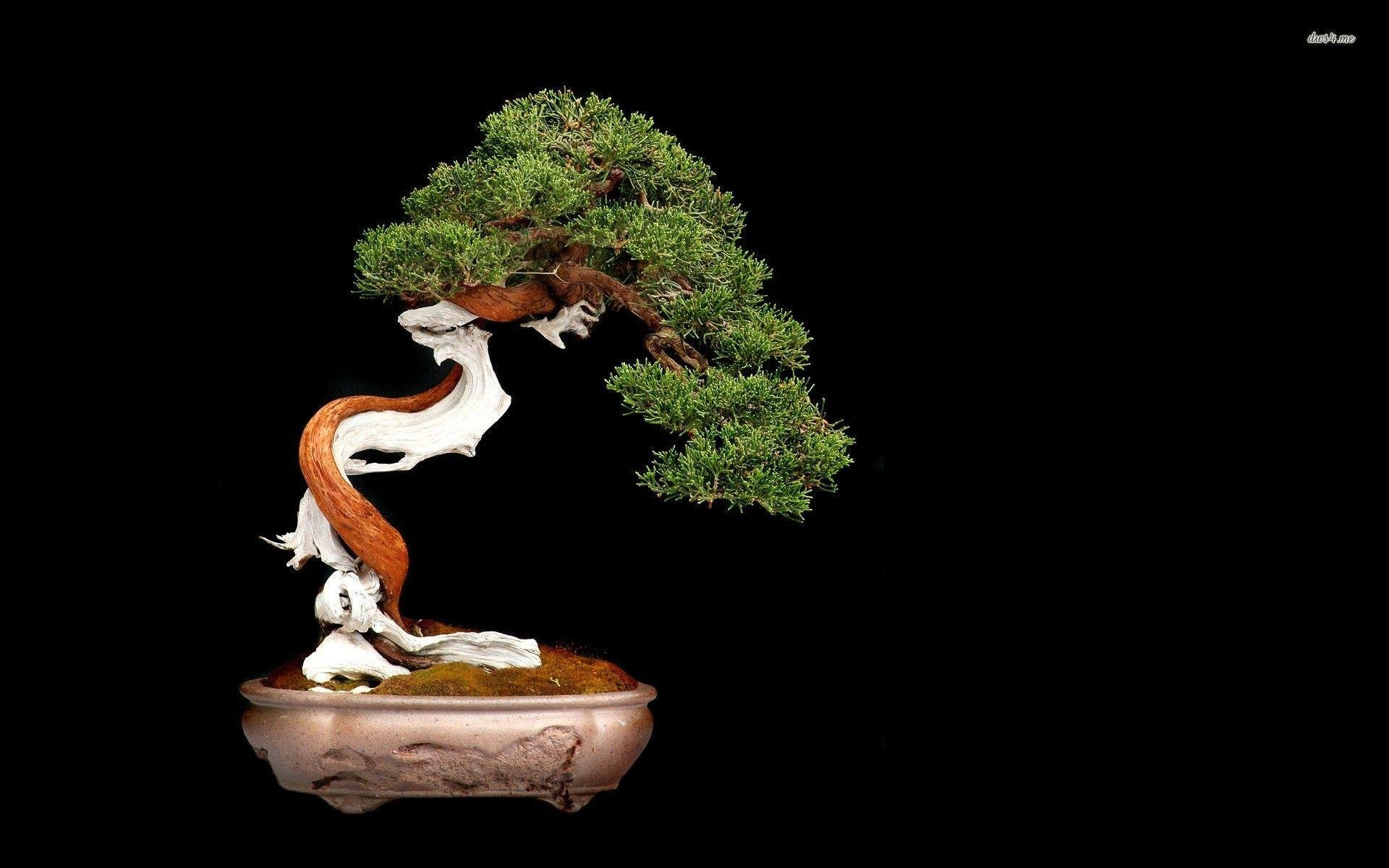 Most Downloaded Bonsai Wallpapers - Full HD wallpaper search